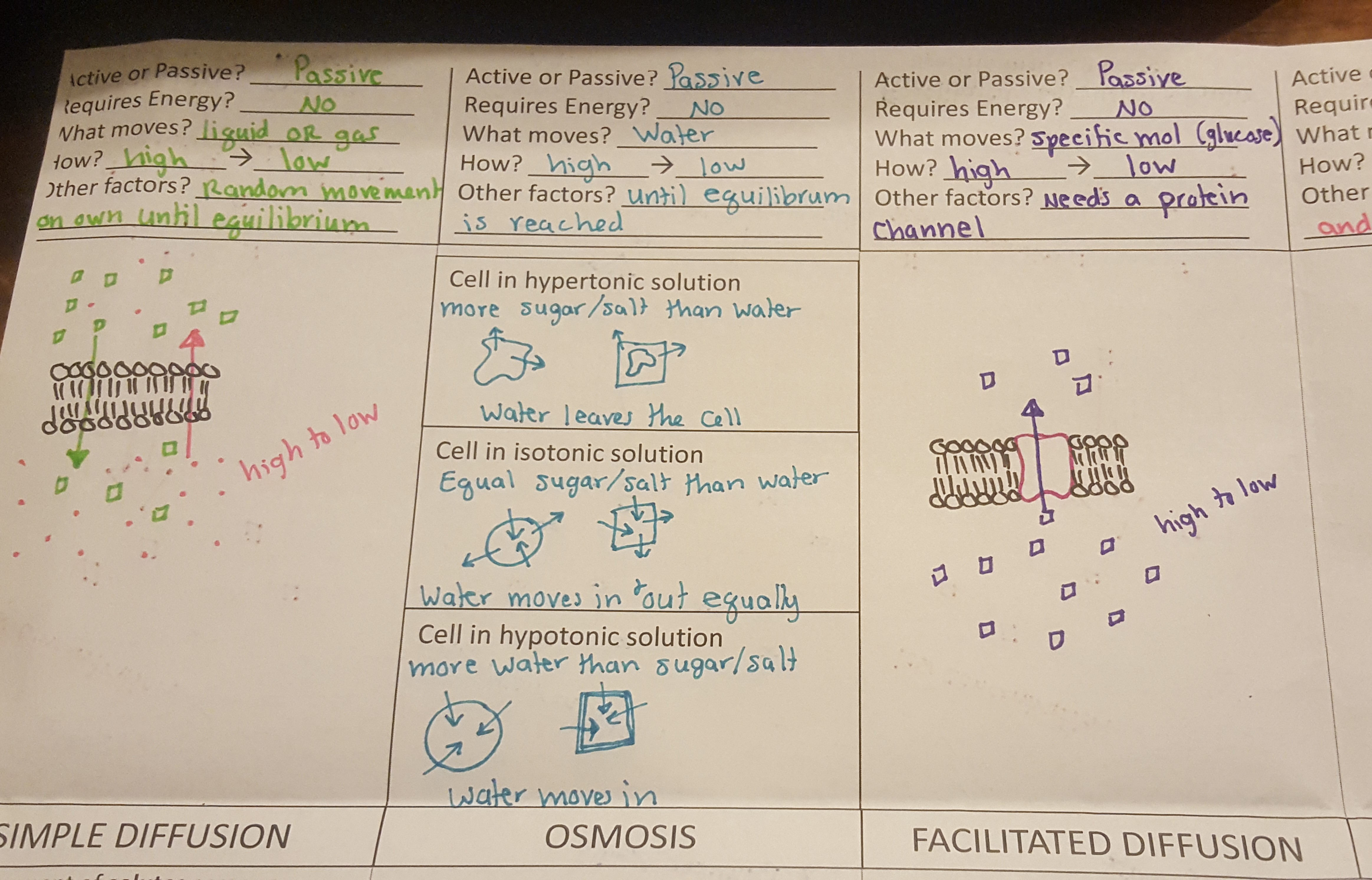 Biology / Notes & Helpful Documents